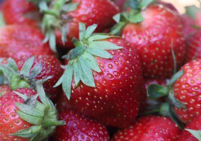 Frutos rojos que condenan un paraíso: Doñana