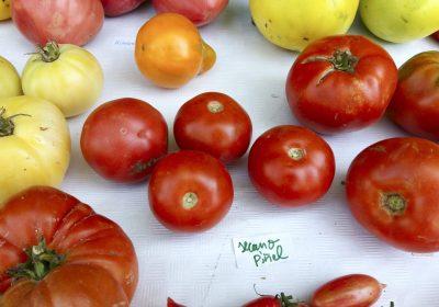 Aroma del tomate para proteger cultivos frente a patógenos y sequías