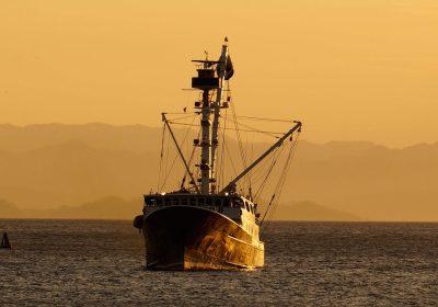 Los científicos anuncian que el bacalao del Mar del Norte ha colapsado