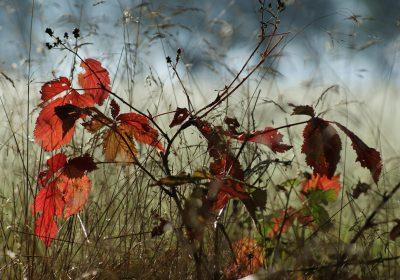 El cambio climático propaga infecciones en las plantas