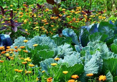 Cultivar dos especies muy diferentes a la vez puede maximizar la producción agraria
