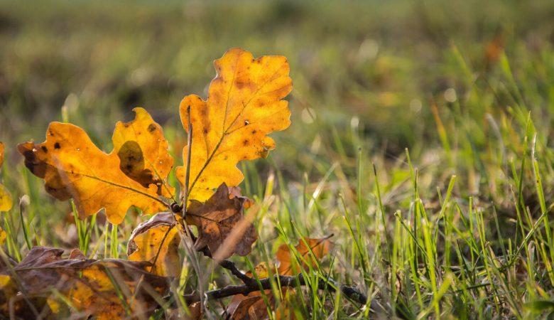 La sincronización es más importante que la riqueza de especies en la estabilidad de la comunidad vegetal a escala mundial