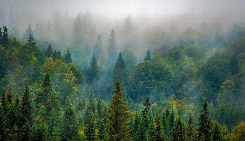 #NoTeComasElBosque pide legislación firme para frenar la importación a la UE de alimentos cultivados en zonas deforestadas