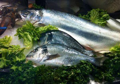 Los pescados y mariscos provenientes de la acuicultura dañan al medio ambiente.