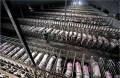 STOP Ganadería Industrial: Petición ciudadana para una moratoria a la ganadería industrial
