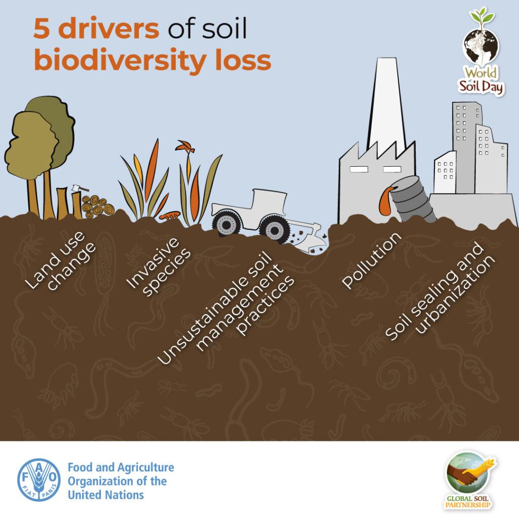 Poner en valor la biodiversidad de los suelos es fundamental para alimentar al planeta