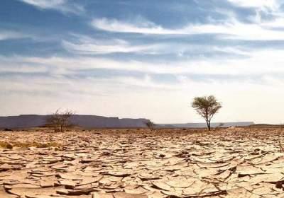 """""""La próxima pandemia"""": la sequía es una crisis mundial oculta, según la ONU"""