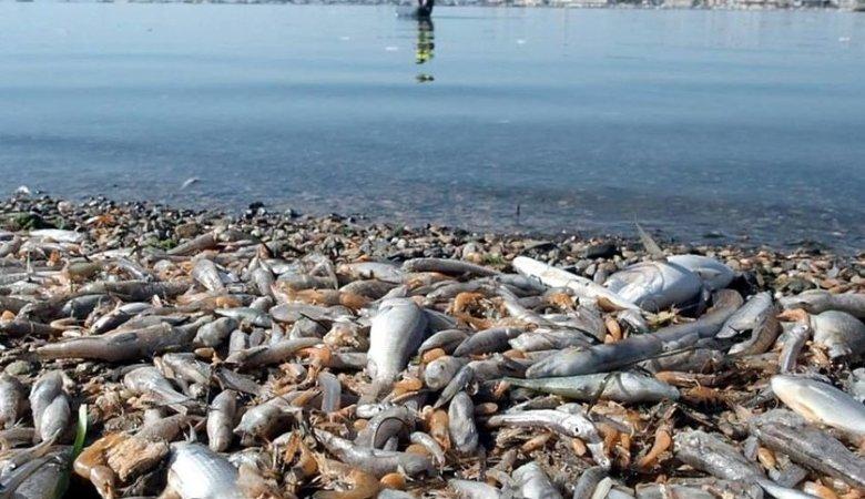 Las dramáticas imágenes del Mar Menor fueron provocadas por el vertido continuado de nutrientes agrícolas