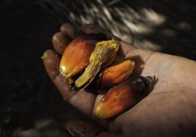 Mujeres indígenas y campesinas se pronuncian ante la violación de sus derechos por la palma africana