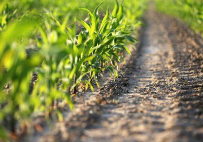 Acuerdo verde de la UE: la agricultura de carbono no es compatible con la agroecología