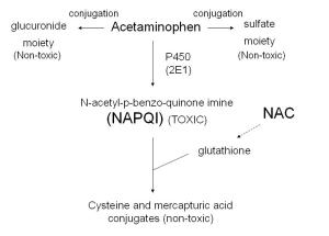 Acetaminophen_metabolism