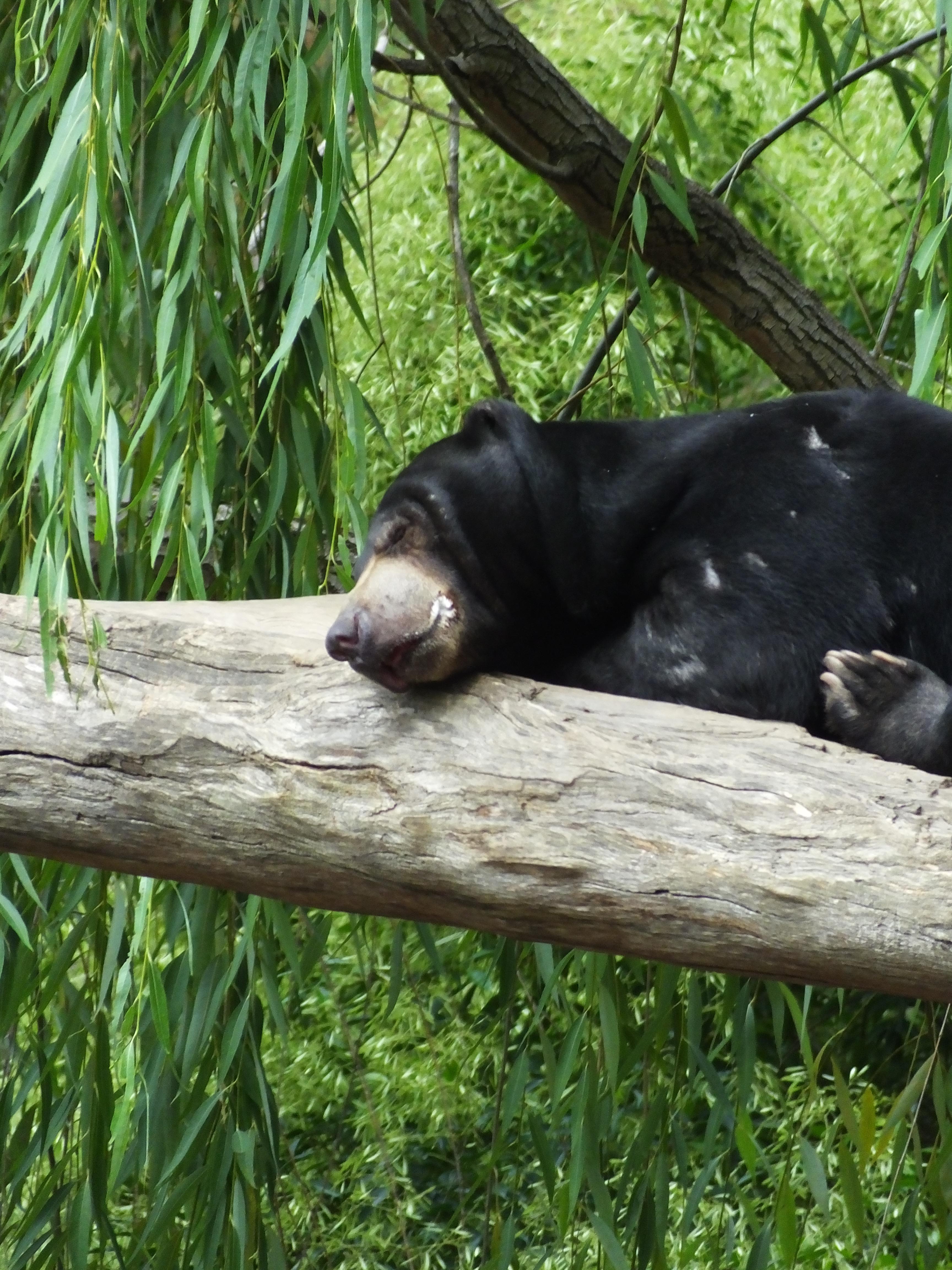 Sleeping animals ...