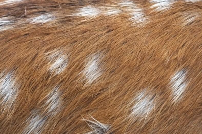 Silka Deer fur