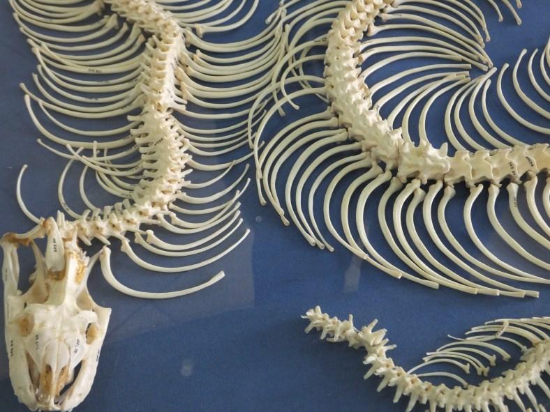 Python Skeleton