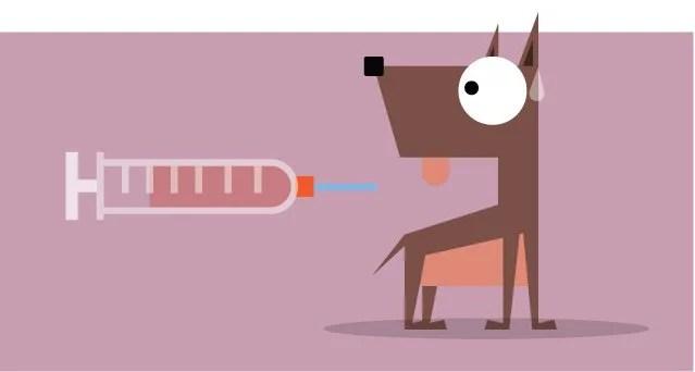 Resultado de imagen para eutanasia perros