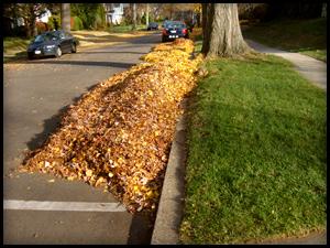 Curbside Leaf Pick-up Girard Ohio