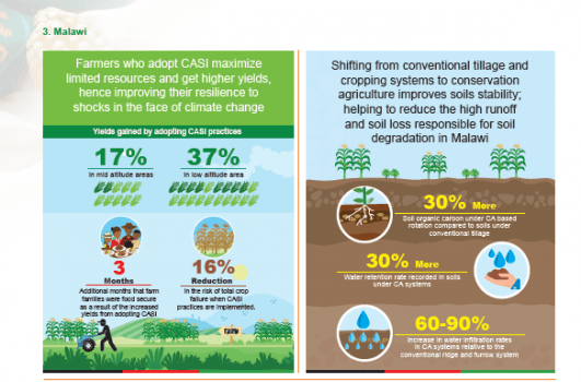 INFOGRAPHICS:  Transforming Farmers Lives Through CASI ( SIMLESA Results summaries)