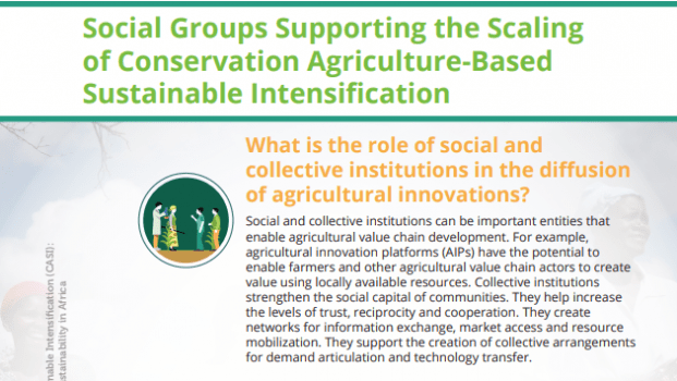 POLICY BRIEF:   Social Groups Supporting the Scaling of Conservation Agriculture-Based Sustainable Intensification