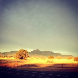 Early morning Sonoita landscape with the Santa Ritas in the distance.