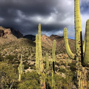 At the base of the trail to Finger Rock in the Santa Catalina Mountains north of Tucson.