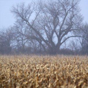 Cornfields adjacent to the Platte River, Nebraska.