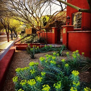 The color palette at Civano, thanks to colorful homes and landscaping, is amazing.