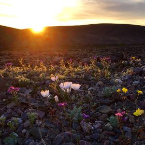 The great Death Valley super bloom of 2017.