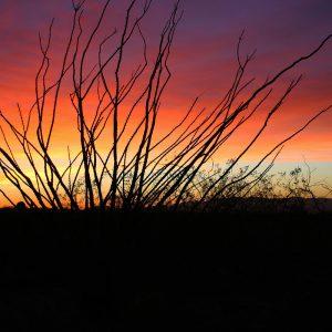 Ocotillo sunset near the Whetstone Mountains southeast of Tucson.