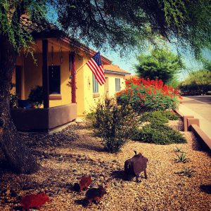 We support javelina both real and sculptured in this wildlife-friendly neighborhood.
