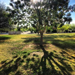 A tree and the shadow of a tree at a park in Tucson.