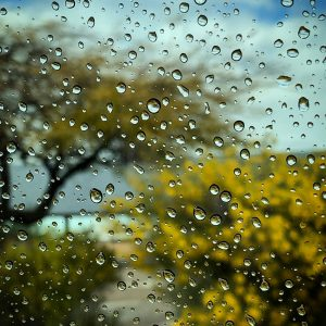 Rain on the card window, bushes and tree in bloom.