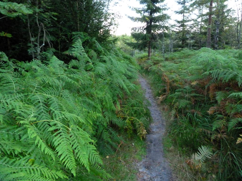 westweg-trail-nach-hilda-huette