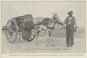 1900's Malta, Donkey delivery!