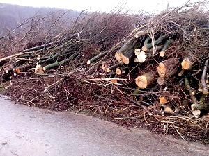 aufgestapelte, abgeholzte Bäume