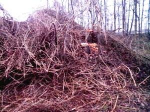 Ranken von Bäumen, auf dem Boden liegend, dazwischen ein Baumstumpf