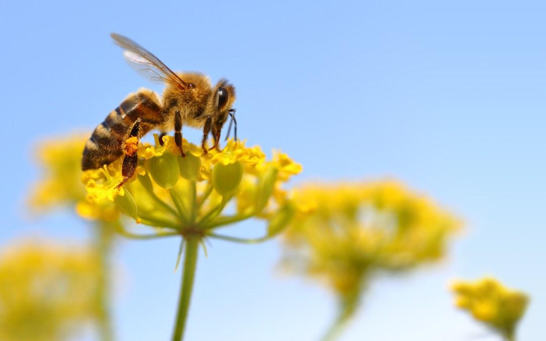E-Mail-Aktion zur Rettung der Bienen!