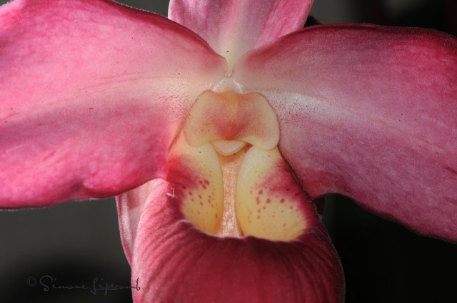 Orchid...their faces amaze me