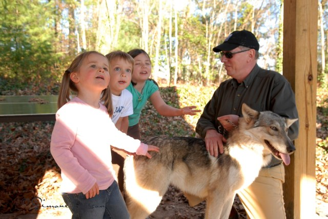 One of my favorite experiences centers around children gaining experience in nature and learning about wildlife...like wolves for instance.