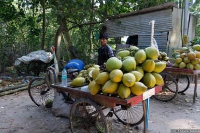 Venditori di cocco