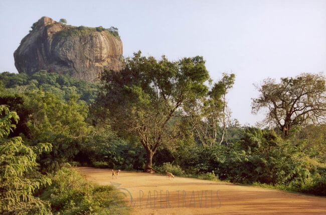 The lion rock, Sri Lanka