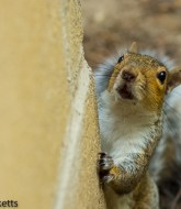 Squirrel by the Barbecue 2
