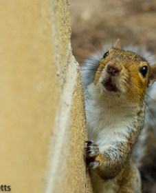Squirrel by the Barbecue 8