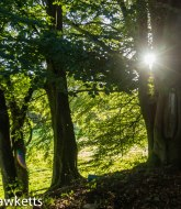 Sunlight through trees 1