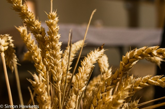 Kentwell Hall Tudor day pictures - Wheat display