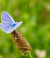 Tamron 90mm f/2.8 macro pictures - Blue butterfly