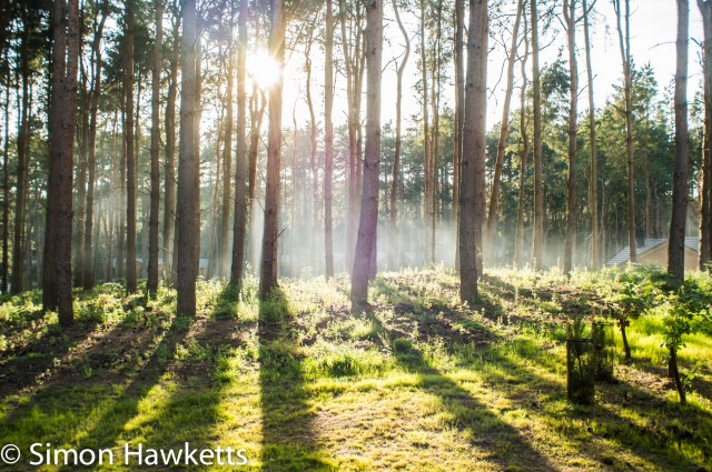 Pictures from Woburn Forest CenterParcs - Sunlight through forest trees in the early morning