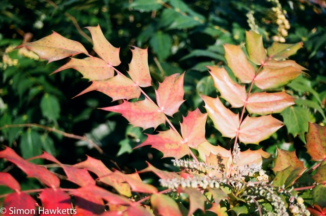 Nikon F80 sample photographs - A leaf in shutter priority