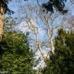 Beningborough Hall pictures - Trees in the woods