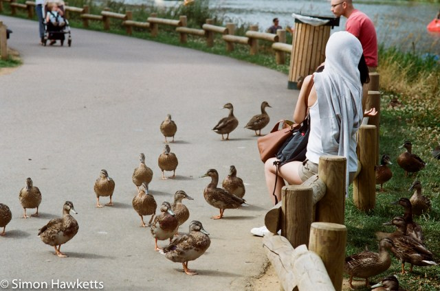 Miranda G slr with Kodak Gold 400 sample picture - People sitting on a low fence looking at ducks in CentreParcs forest