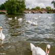 Minolta Dynax 505si Super sample pictures - Swans